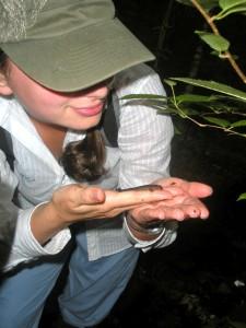 A Salamander